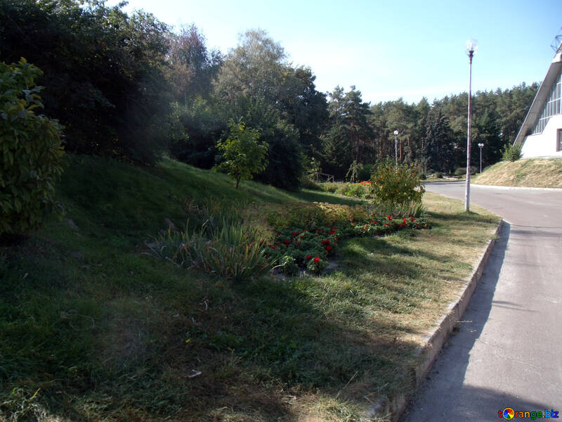 Bushes  at  slope №10013