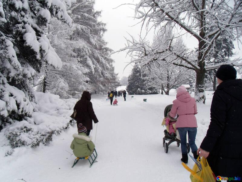 Winter  walks №10604