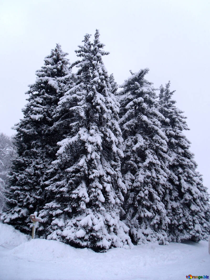 Snow   №10529