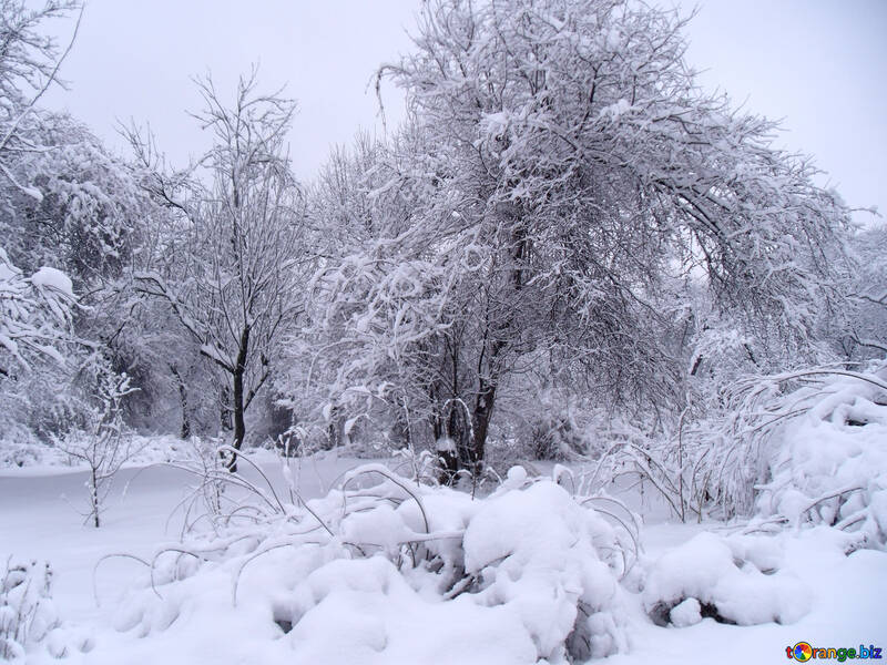 Snow  Park №10516
