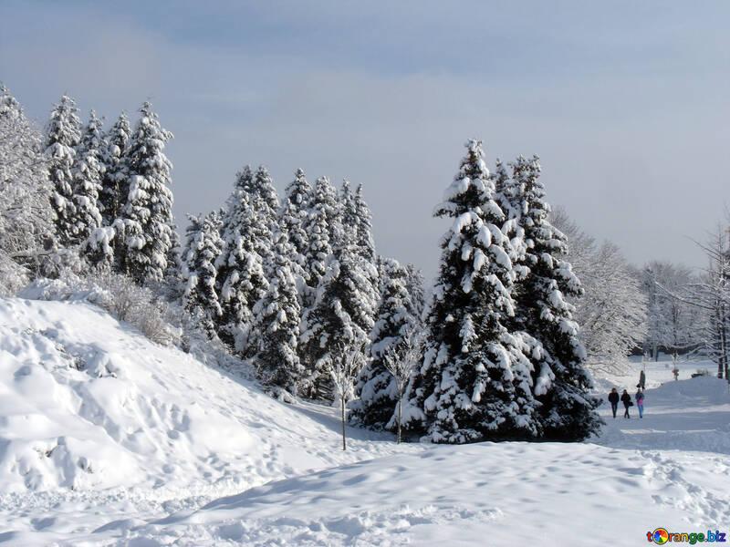 Tree  Snow  sun №10526