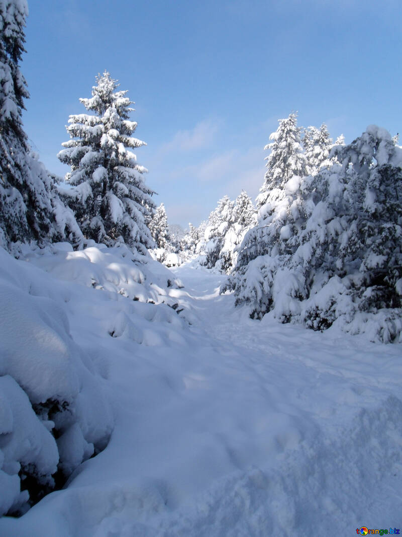 Snow  winter №10573