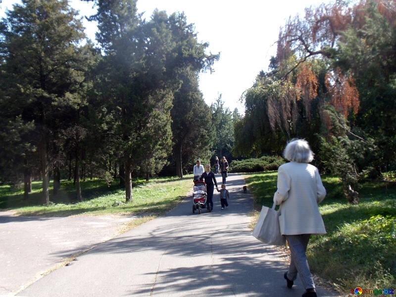 Walk  at  fresh  air №10040