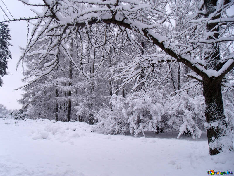 Winter  landscape  №10530