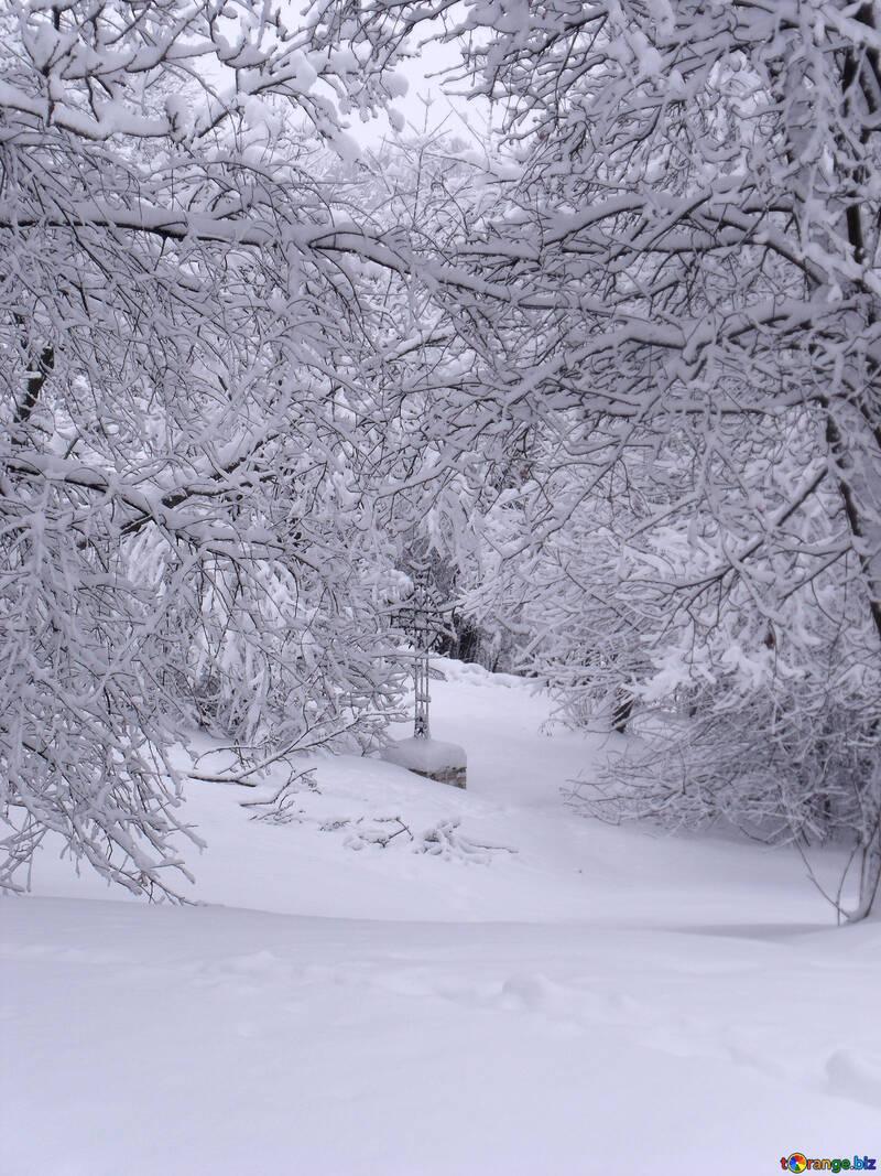 Russian  Winter №10513