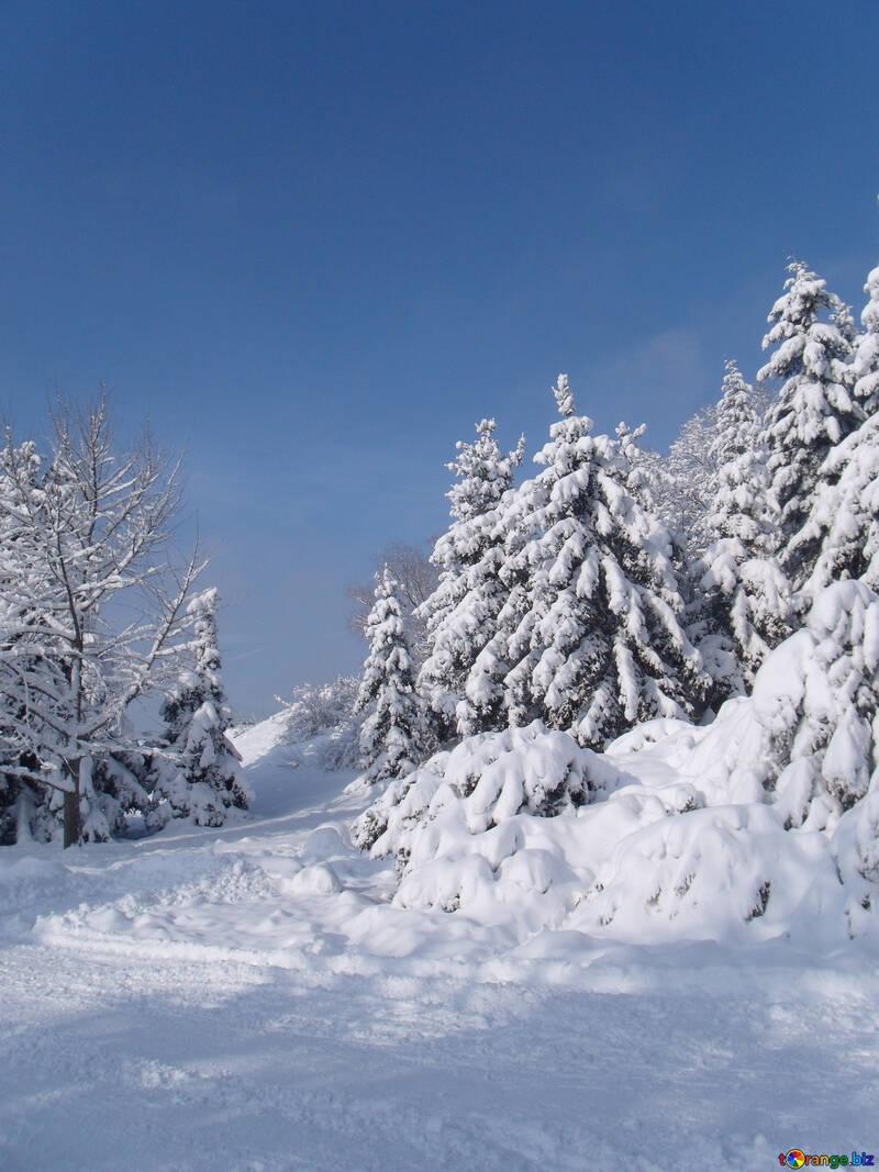 Winter  slope №10523