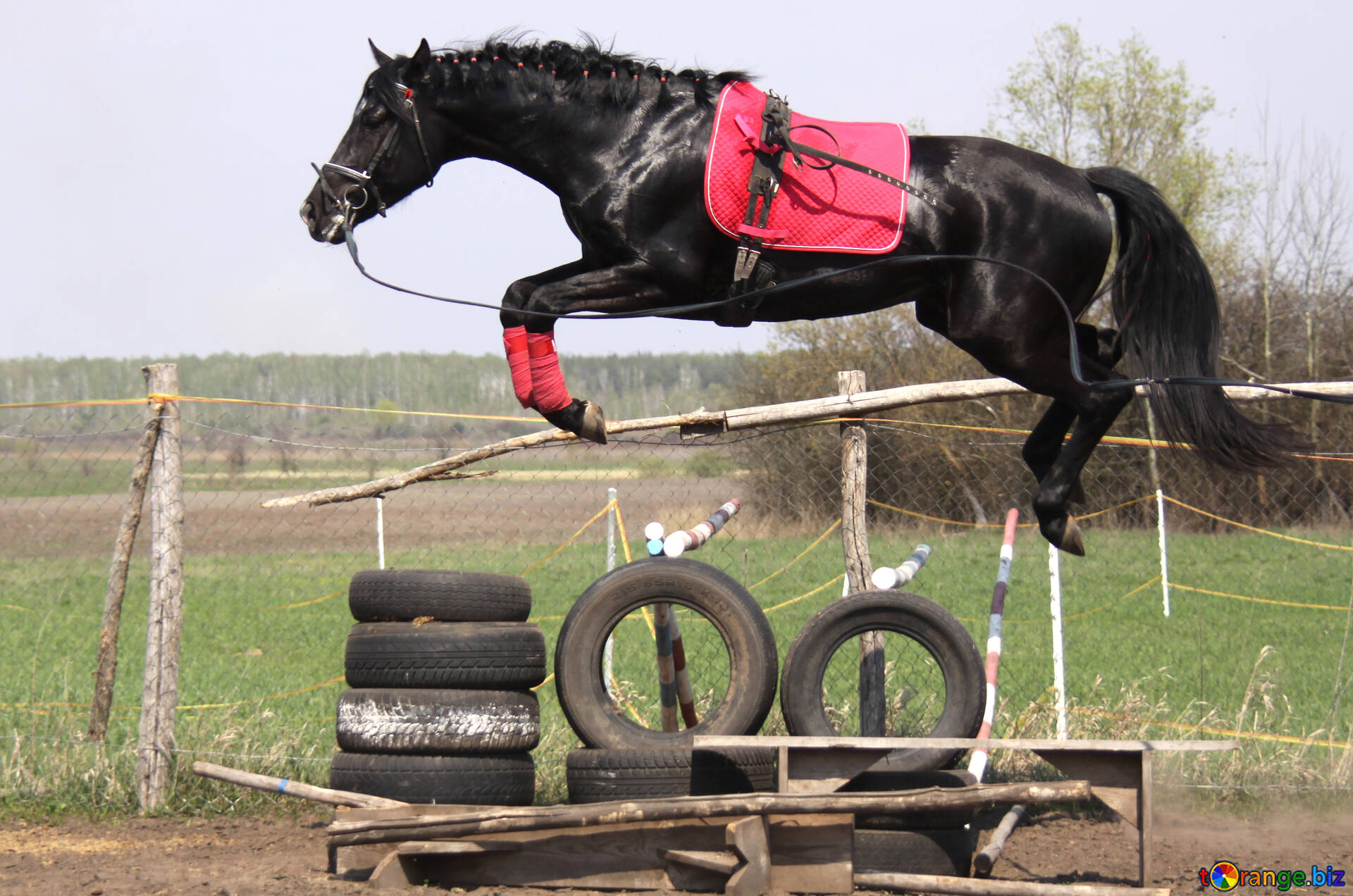 Jumping Horse Flying Horse Sport 11046