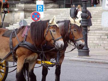 Рабочие лошадки №11716