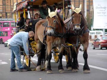 Letame di cavallo №11758