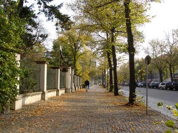 Autumn №11595