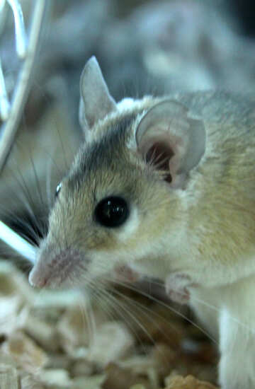 Мышка №11258