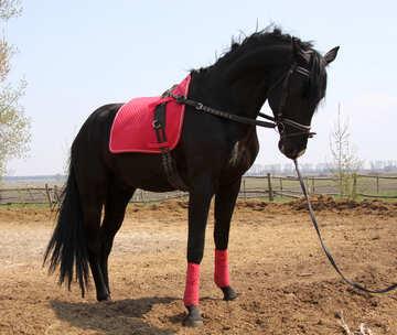 Horse №11055