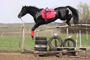 Jumping  horse №11050