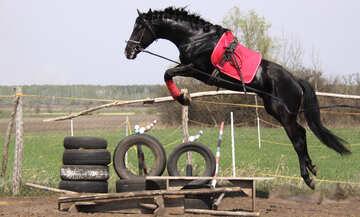 Pferd    Sprung №11051