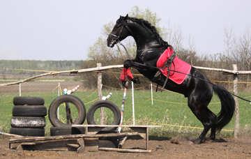 Jump   horse №11053