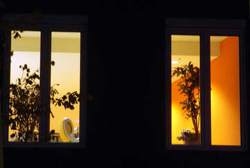Silhouettes of plants in the night window №11503