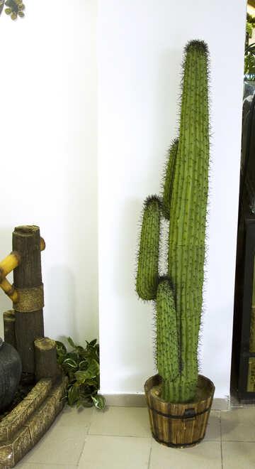 Cactus in interior  №11323