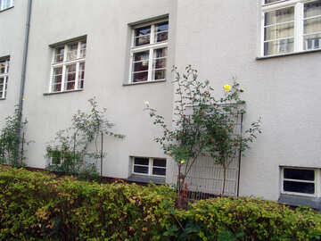 Plants and facade №11612