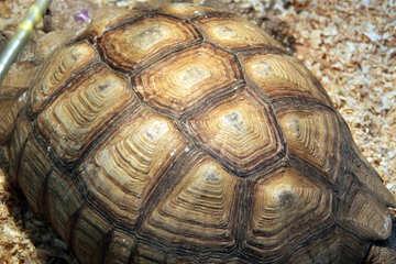 Tortoise Texture №11078