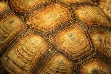 Tortoise Texture №11097