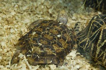 Elastic turtle №11147