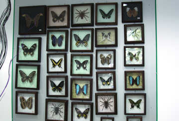 Accumulazione farfalle  №11321