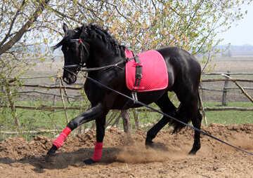 Coaching  horse №11054