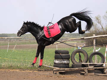 Addestramento   cavalli  per  Sport №11045
