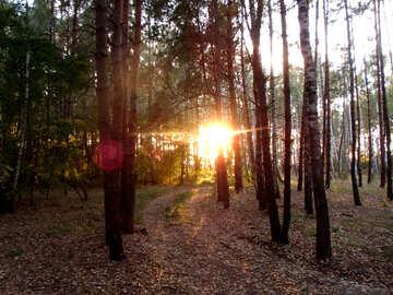 Autumn Sunset №11352