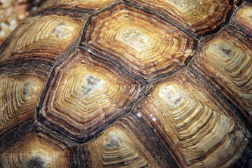 Turtle Texture №11156