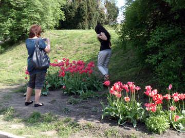 Photos near tulips  №11026
