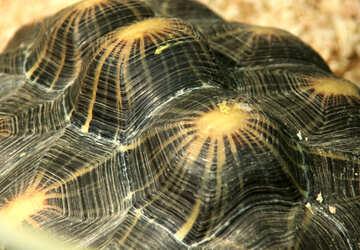 Turtle Texture №11111
