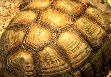 Turtle.  Texture. №11130