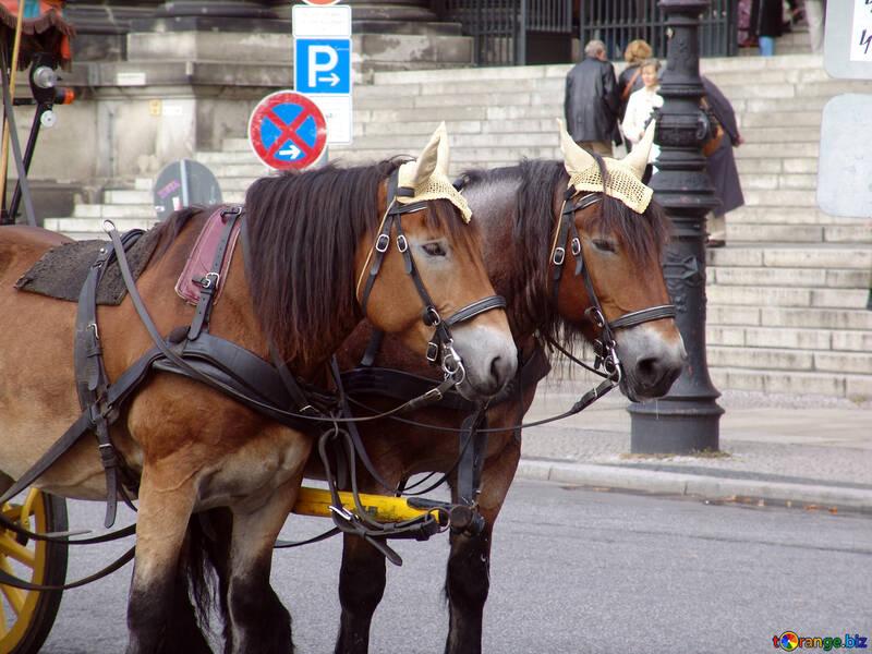 Wheelhorse №11716
