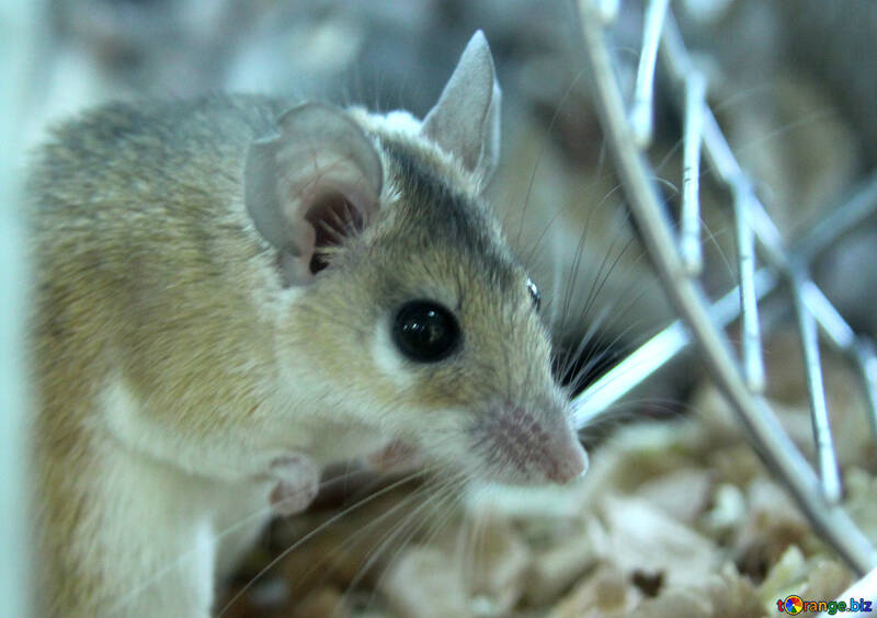 Home Mouse №11254