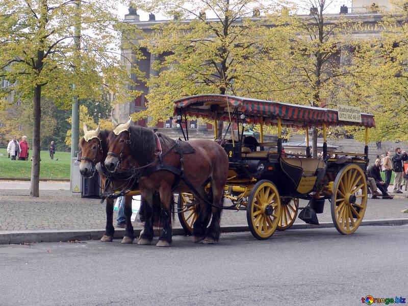 Pleasure horse carriage №11676
