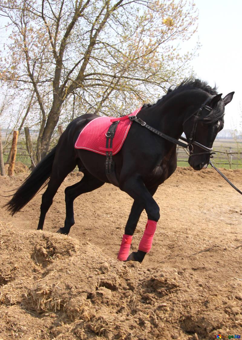 Education  horse №11056