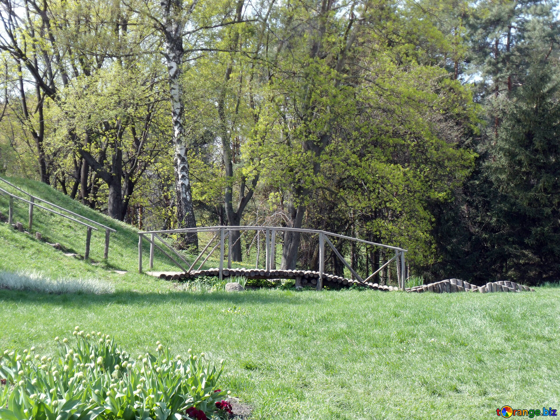 Download Free Image Wooden Bridge In The Landscape In Hd