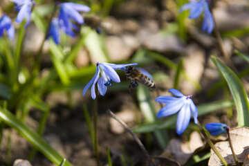 Flight bee №12792