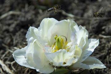 Bee on flower №12893