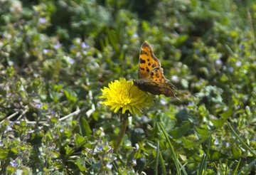 Butterfly on flower №12842