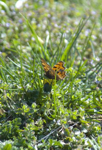 Butterfly on flower №12858