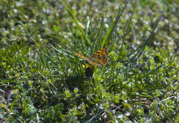 Butterfly on grass №12885
