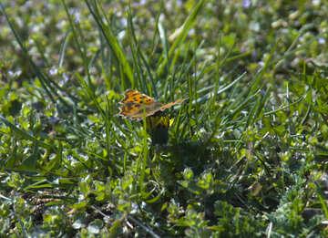 Orange butterfly on grass №12878