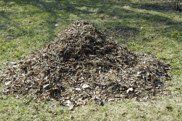 A pile of leaves №12866