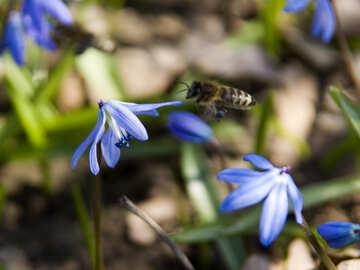 Bee flies to flower №12769