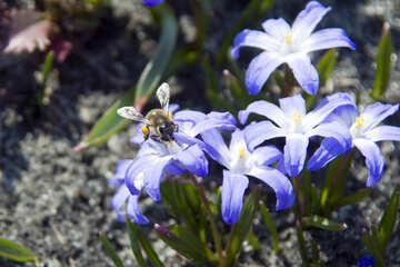 Bee on flower №12781