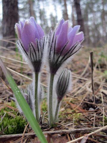 Fluffy flower №12661