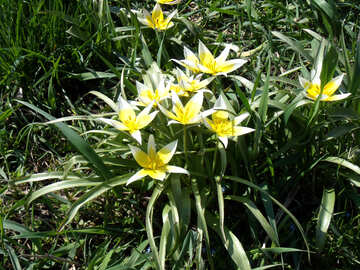 Yellow spring flower №12927