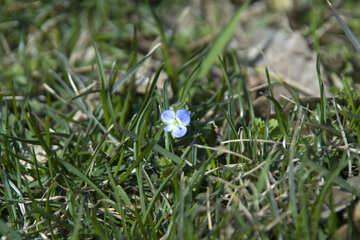 Floret №12790